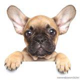 Francia bulldog mintás mikroflanel pléd, 120 x 150 cm
